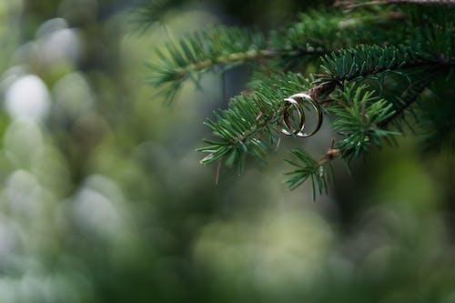 คลังภาพถ่ายฟรี ของ การแต่งงาน, คู่, ทอง, ธรรมชาติ