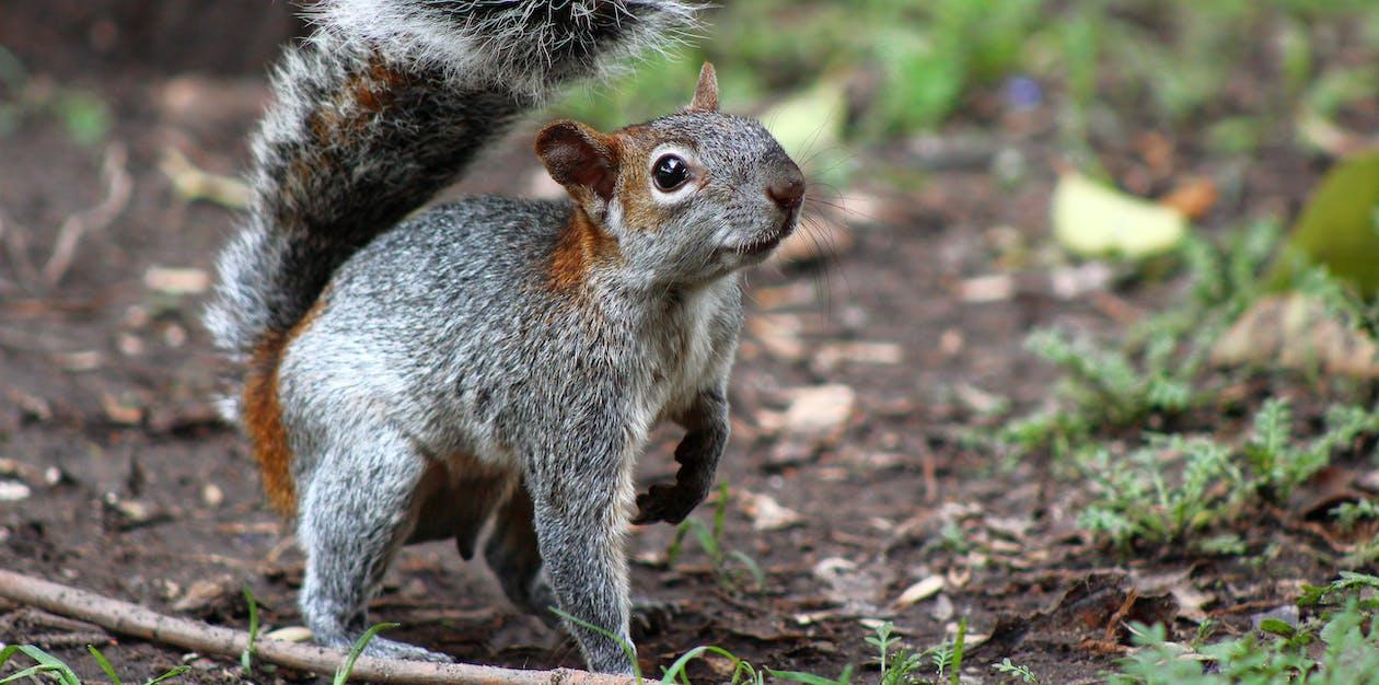 Gratis lagerfoto af chapultepec, egern, mexico