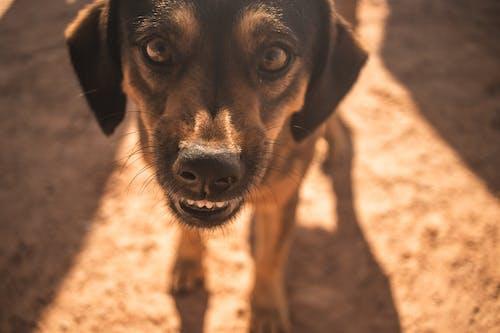 Бесплатное стоковое фото с глаз, дружба, животное, любовь