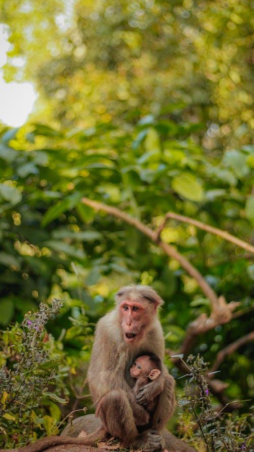 Kostnadsfri bild av apa, blad, däggdjur