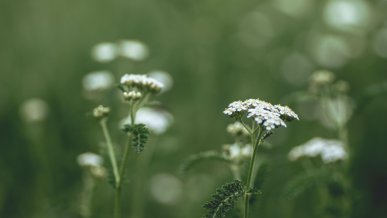 Kostenloses Stock Foto zu außerorts, blume, blüten, draußen