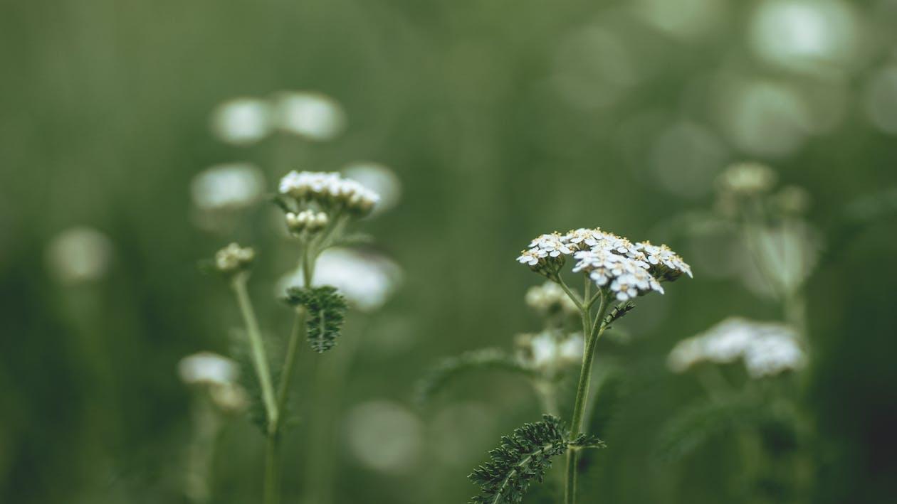 乾草地, 乾草田, 增長