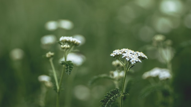 Free stock photo of grass, meadow, close-up view, plants