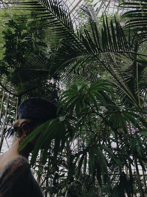 Gratis lagerfoto af bambus, blad, botanisk have, dagens billede