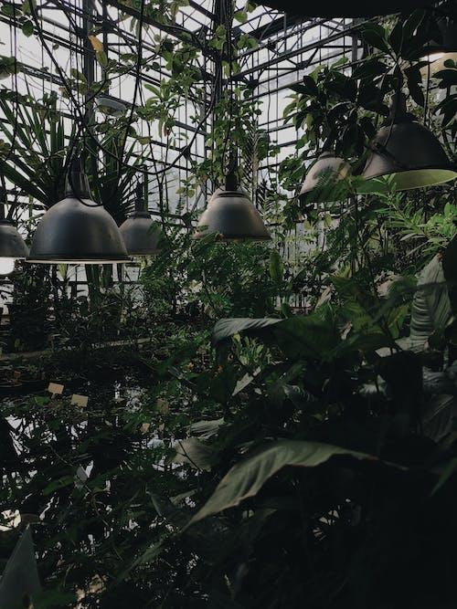 Gratis lagerfoto af arkitektur, blad, blomst, botanisk have