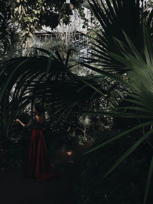 Gratis lagerfoto af bagbelyst, botanisk have, dagens billede, dagslys