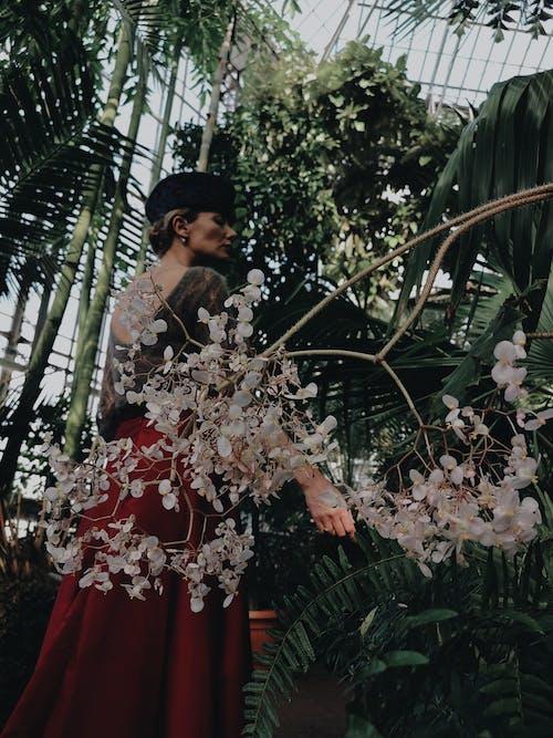 Gratis lagerfoto af blomst, blomsterarrangement, botanisk have, dagens billede
