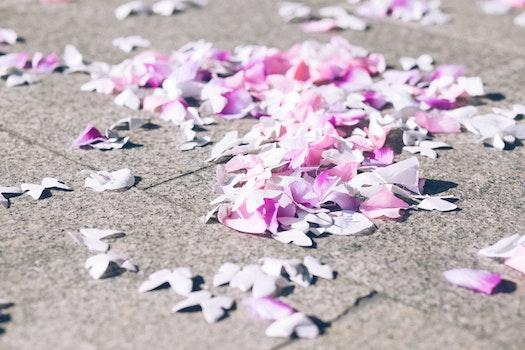 Free stock photo of flowers, petals, blur, ground
