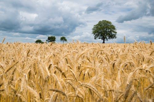 Kostnadsfri bild av åkermark, bondgård, fält, frön