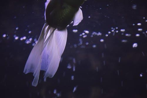 akvaryum balığı içeren Ücretsiz stok fotoğraf