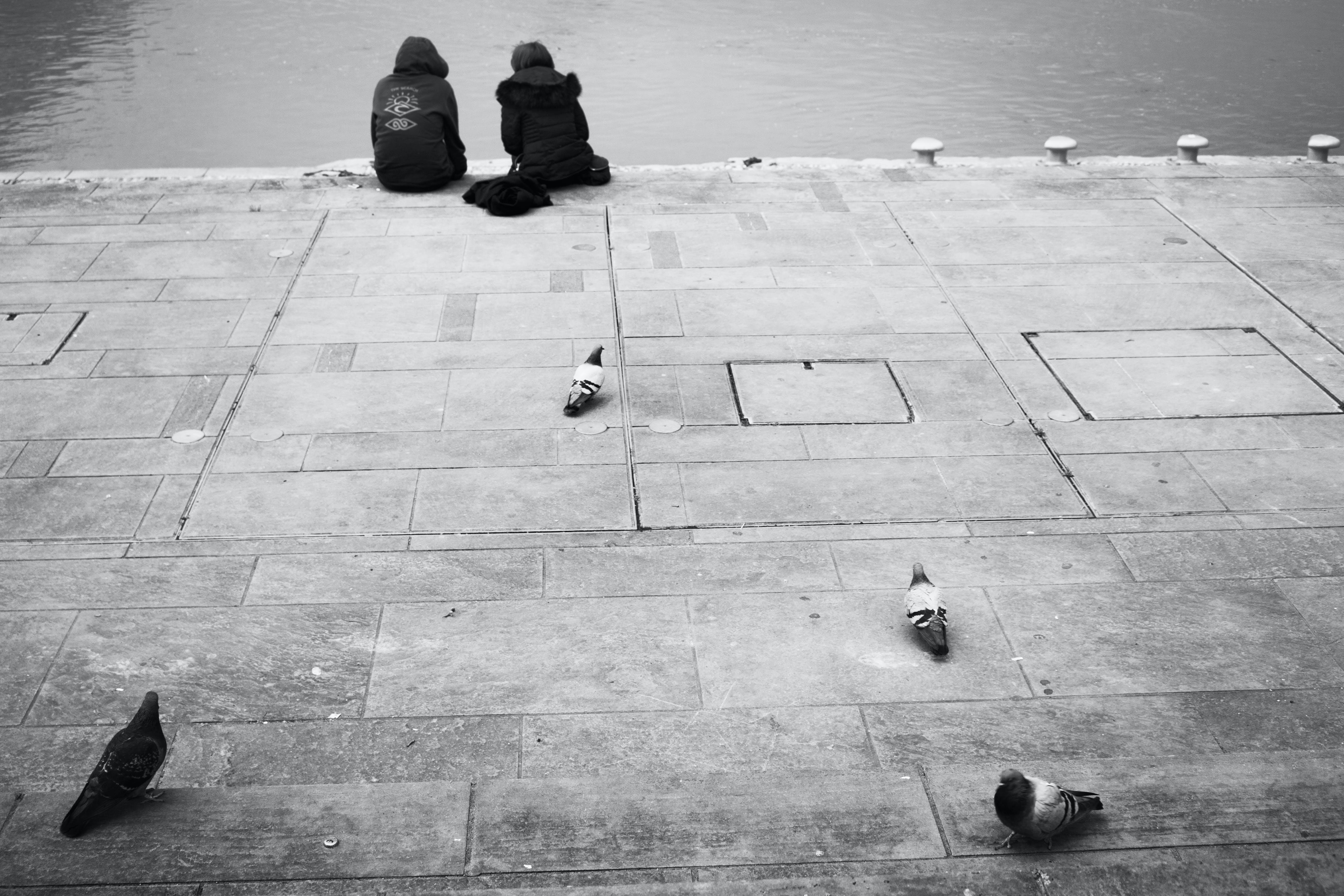 Základová fotografie zdarma na téma černobílá, dok, dvojice, holubice