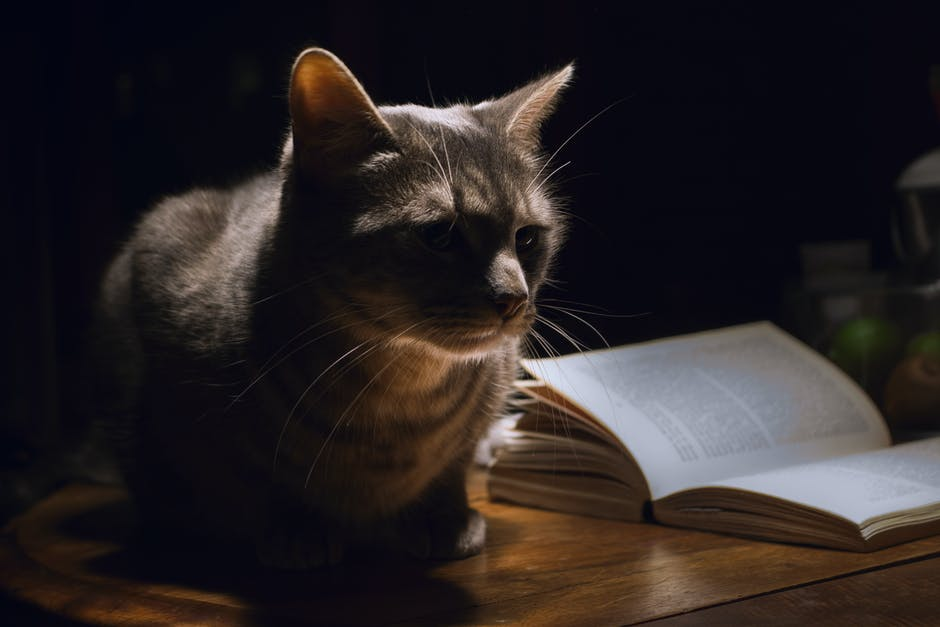 Grey Tabby Cat Laying Next to Book
