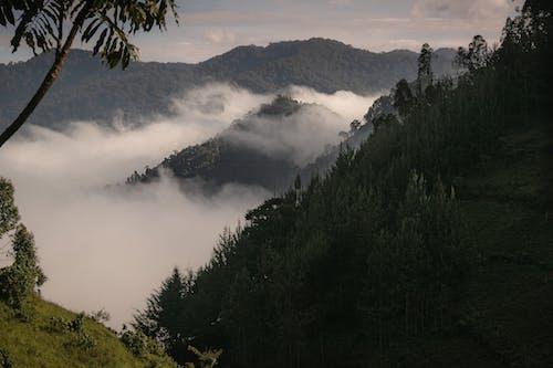 Free stock photo of jungle, mountains, nature landscape