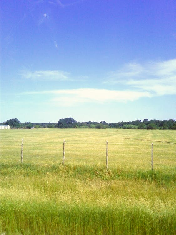 Free stock photo of country, field