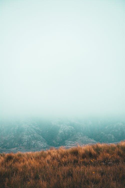 Kostnadsfri bild av berg, dimma, falla, gräs