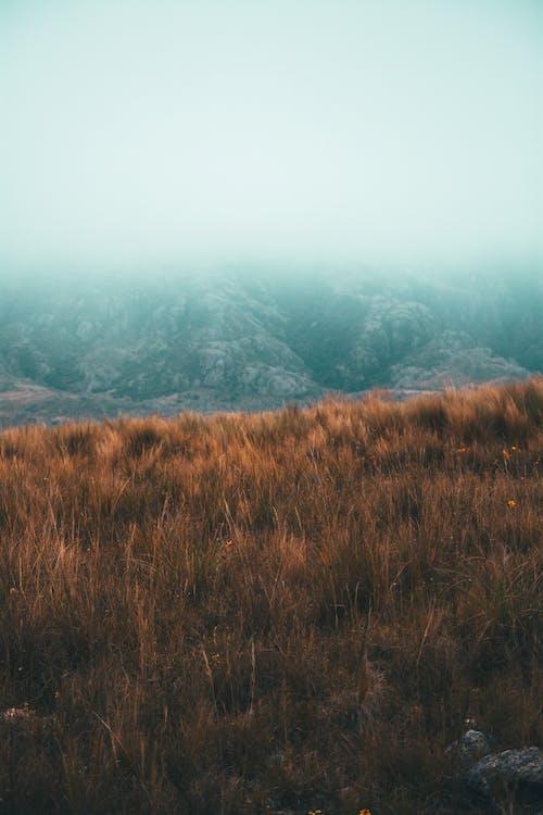 Kostnadsfri bild av berg, dimma, falla, färg