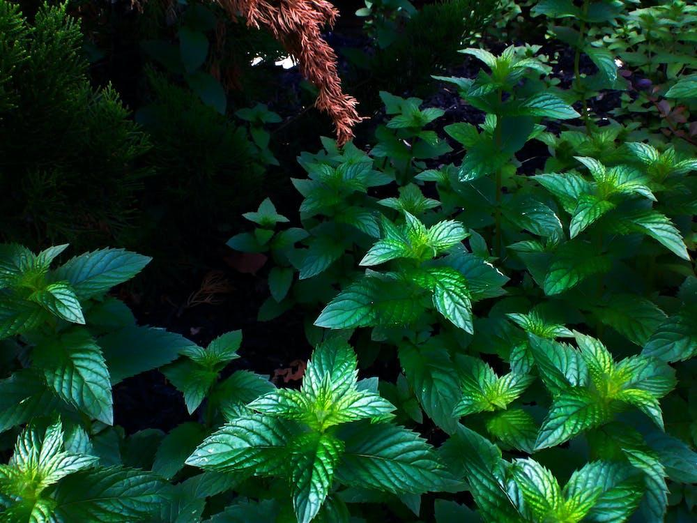 Free stock photo of dark green