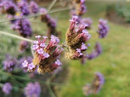 Photos gratuites de magnifiques fleurs