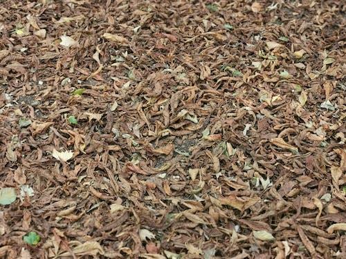 Photos gratuites de de la feuille, feuille d'automne