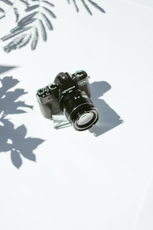 Kostnadsfri bild av blad, disjunkta, film