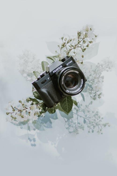 Ingyenes stockfotó antik, felszerelés, fényképezőgép, fuji témában