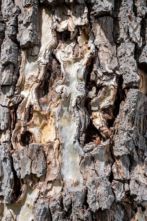 Textured dry bark from old tree