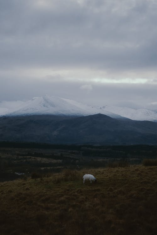 White sheep pasturing on mountain valley