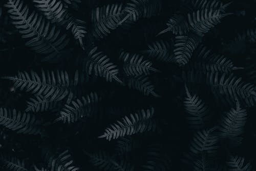 Black and Gray Leaf Textile