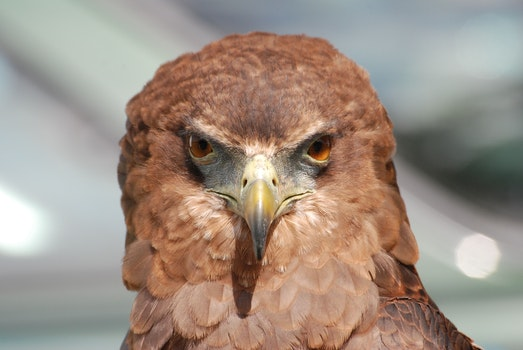 Free stock photo of bird, animal, beak, macro