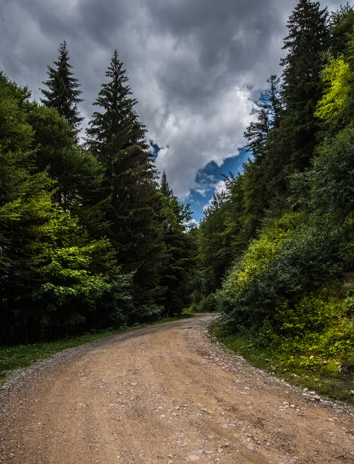 Free stock photo of Forrest road