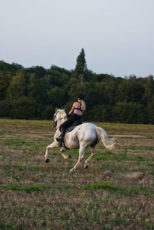 Horseback riding of woman on meadow in countryside