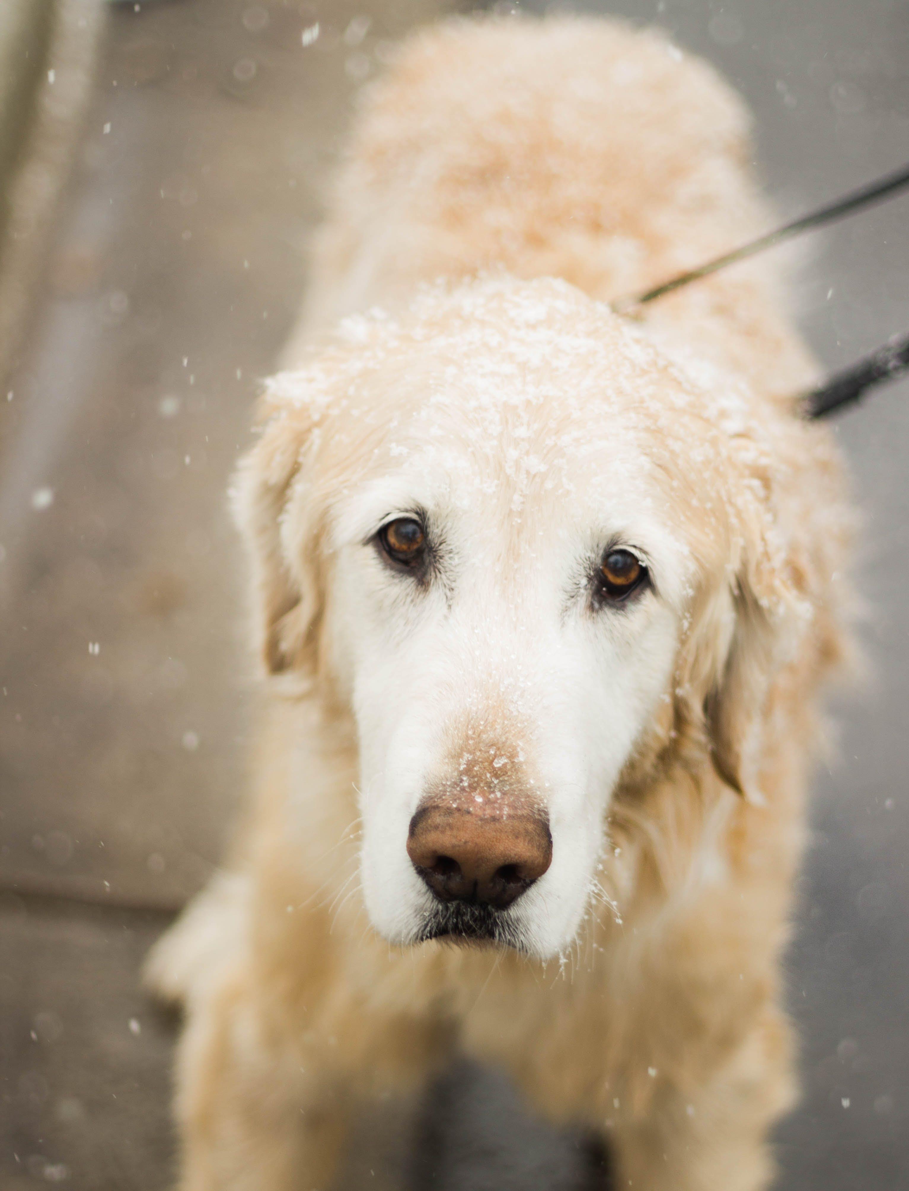 White Long Coated Medium Size Dog With Black Lace