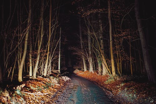 Illuminated path in autumn leafless forest