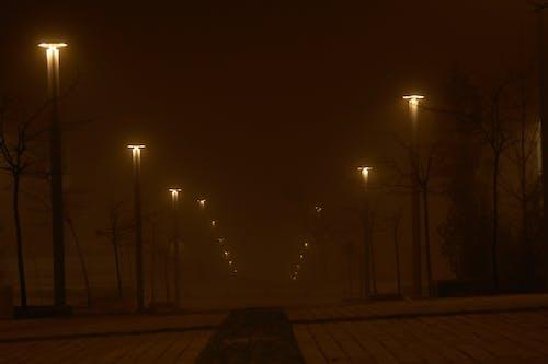 Free stock photo of bosque de niebla, espesa niebla, frio