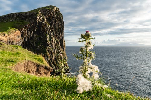 Free stock photo of cliff, scotland, summer, thistle