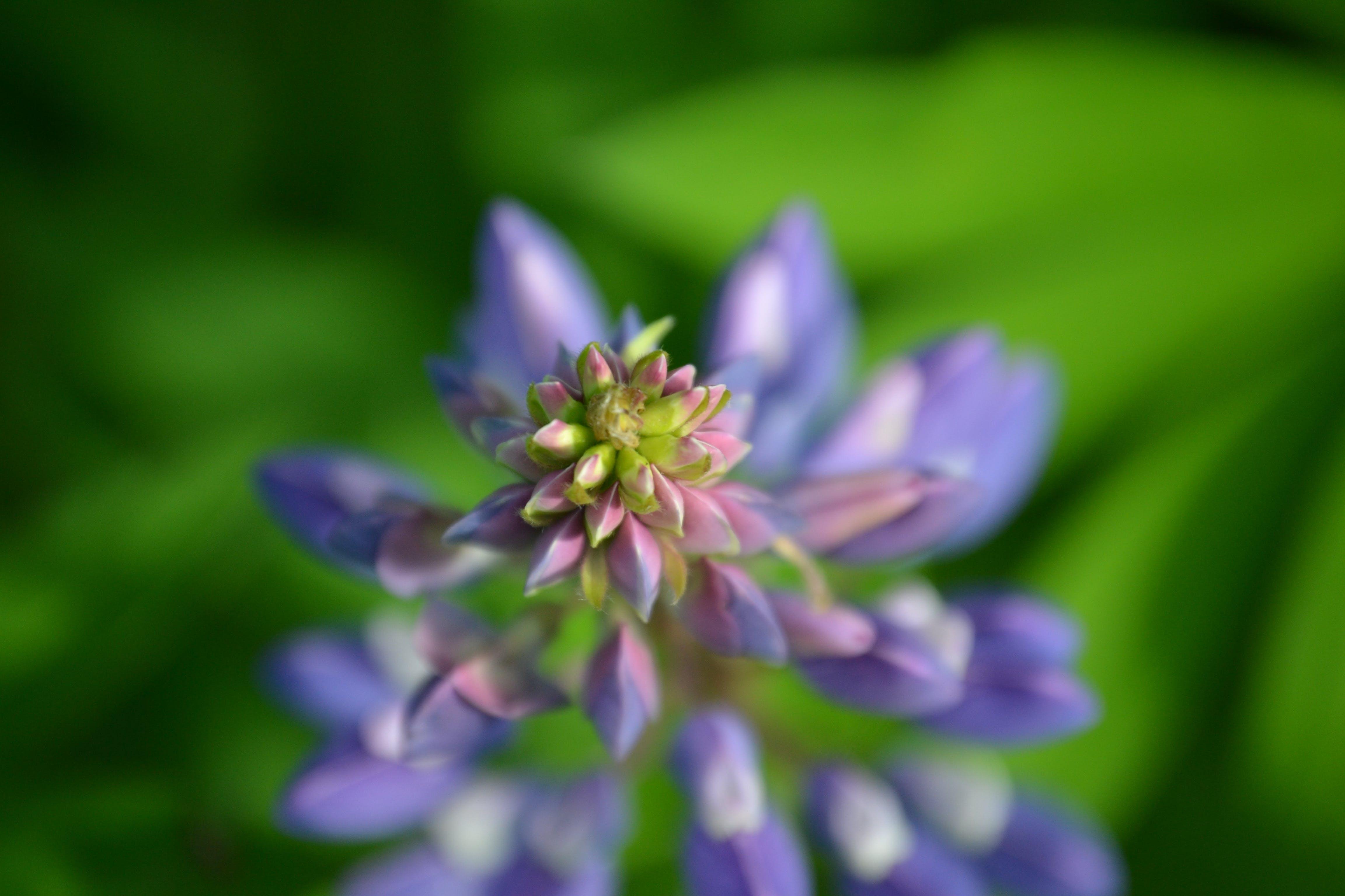 Focus Photography of Purple Petaled Flower