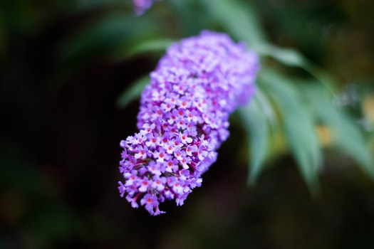 Free stock photo of nature, flowers, plant, blur