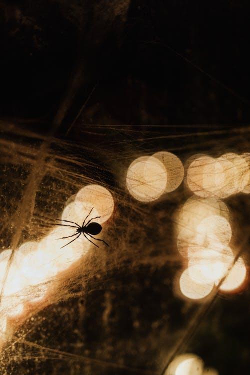 คลังภาพถ่ายฟรี ของ arachnophobia, ซิลูเอตต์, น่าขนลุก, ภาพย้อนแสง