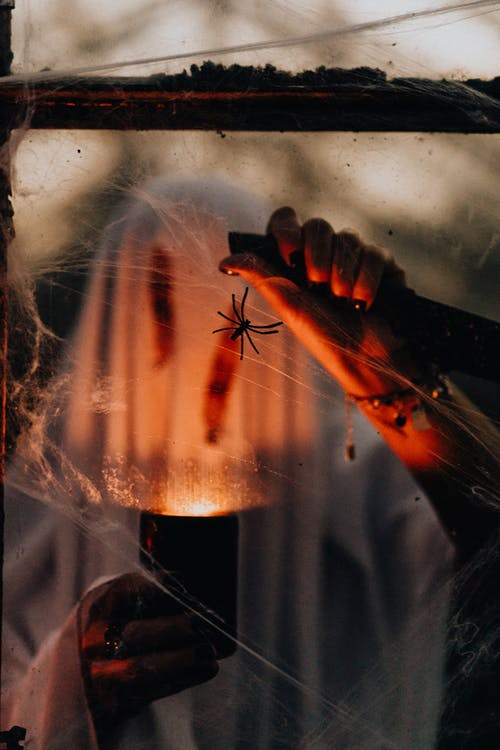 Person Holding a Red and Black Spider