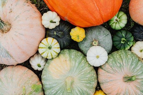 asma kabağı, Bahçe, bal kabağı içeren Ücretsiz stok fotoğraf