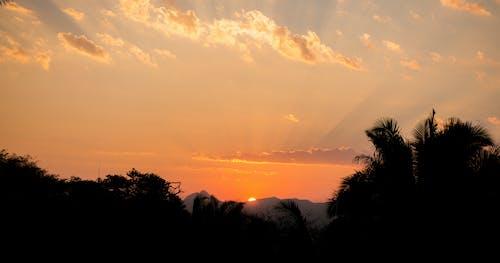 Kostnadsfri bild av anläggning, bakgrundsbelyst, gryning, himmel