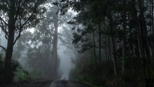 Free stock photo of country road, dark, foggy morning