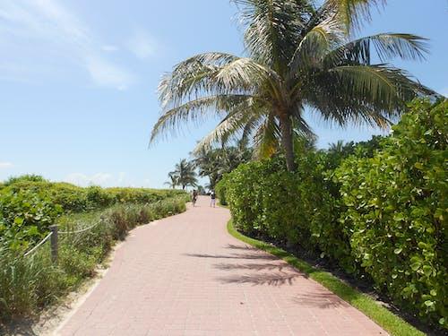 Free stock photo of beach, florida, footpath
