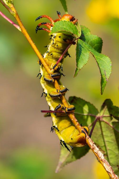 Green Caterpillar on Green Stem