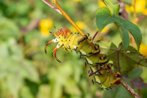 Yellow and Black Caterpillar on Green Stem