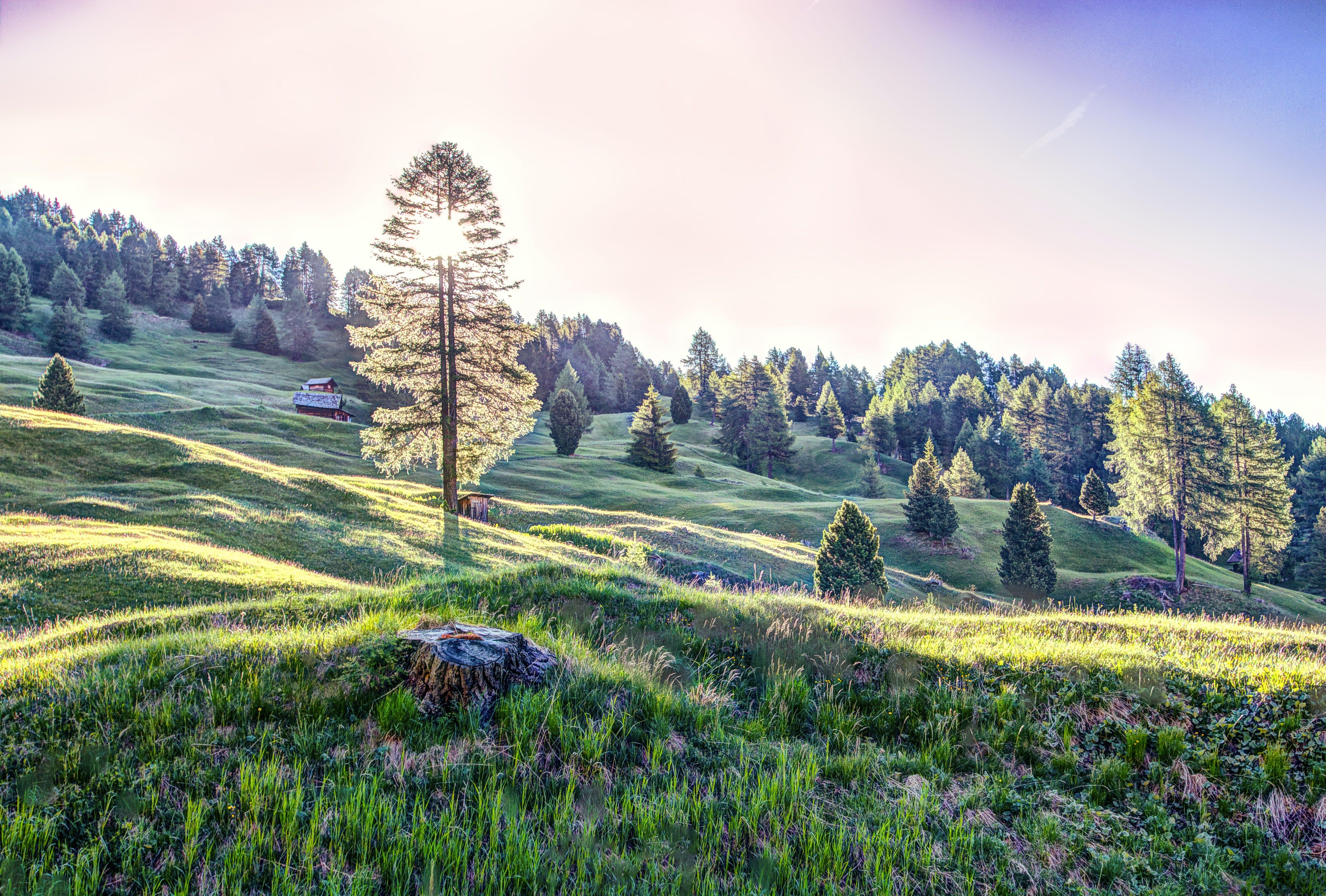 Ảnh lưu trữ miễn phí về ánh sáng ban ngày, cánh đồng, cây, cỏ