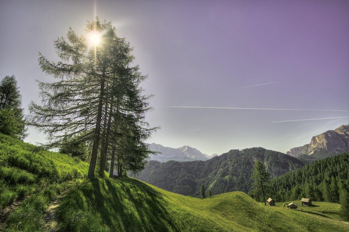 arbres, bois, ciel
