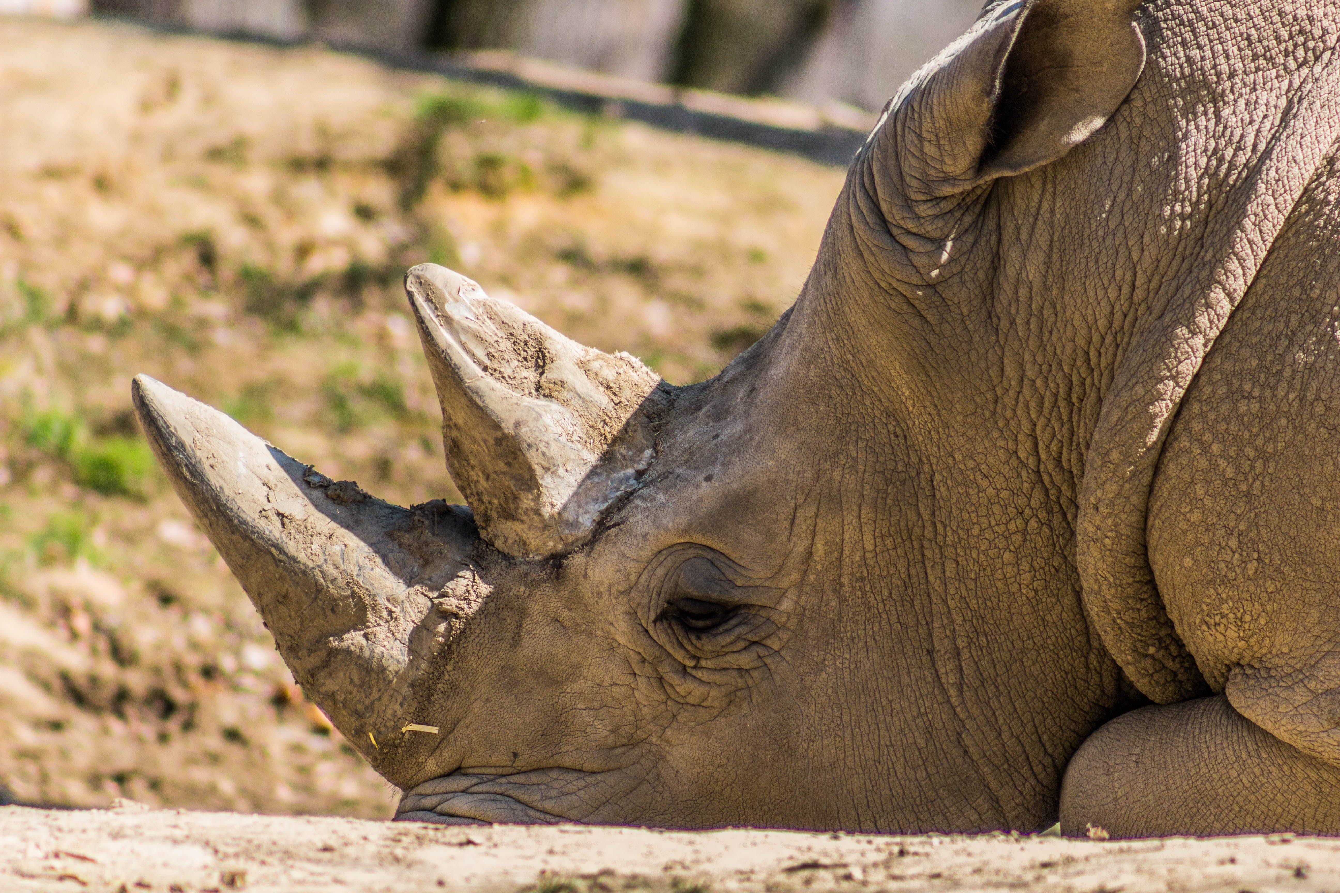 animal, big, close -up