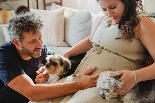 Cheerful pregnant female in beige dress and bearded male with curly gray hair stroking cute adorable dogs