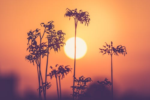 Silhouette of Plants during Golden Hour